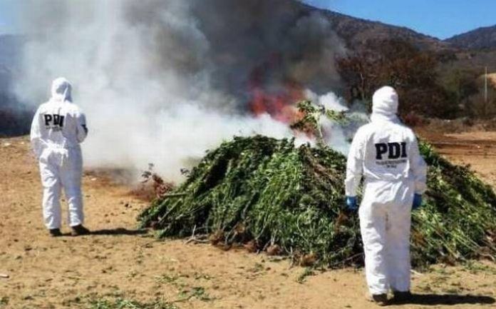 quemando marihuana pdi